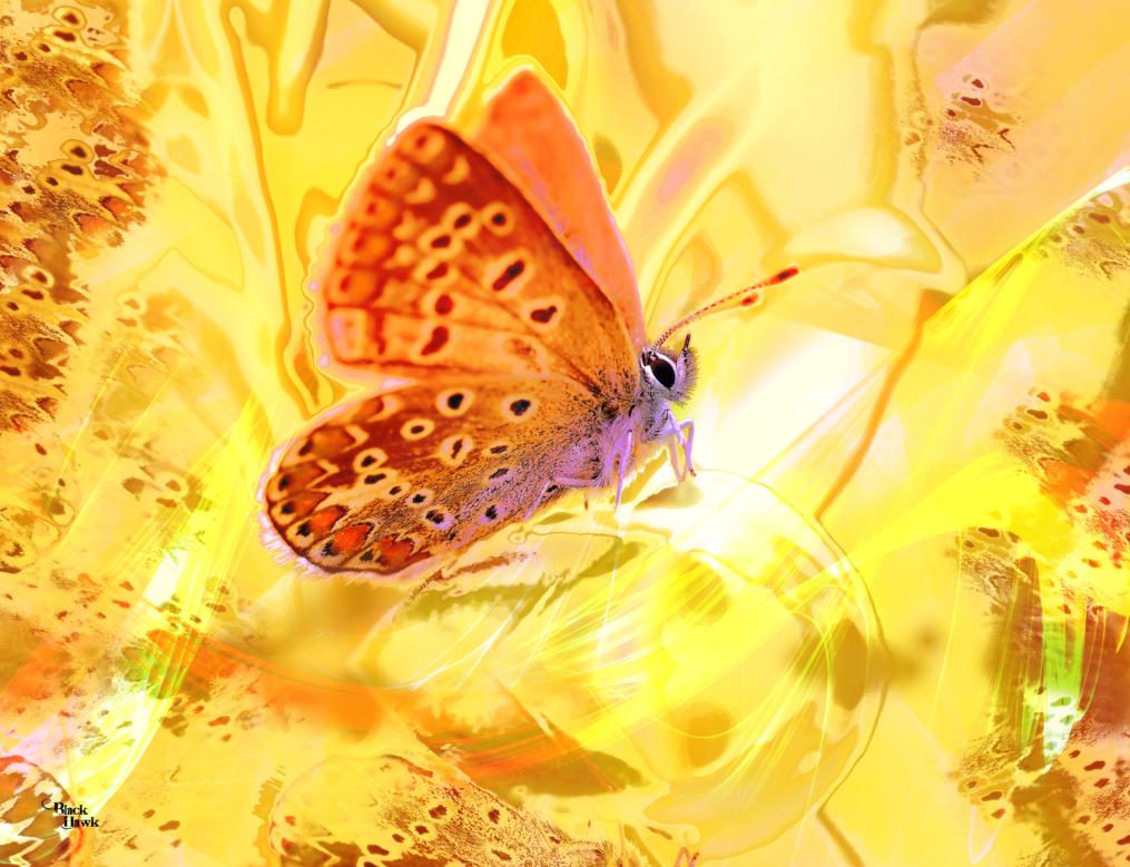 Butterfly dream .jpg