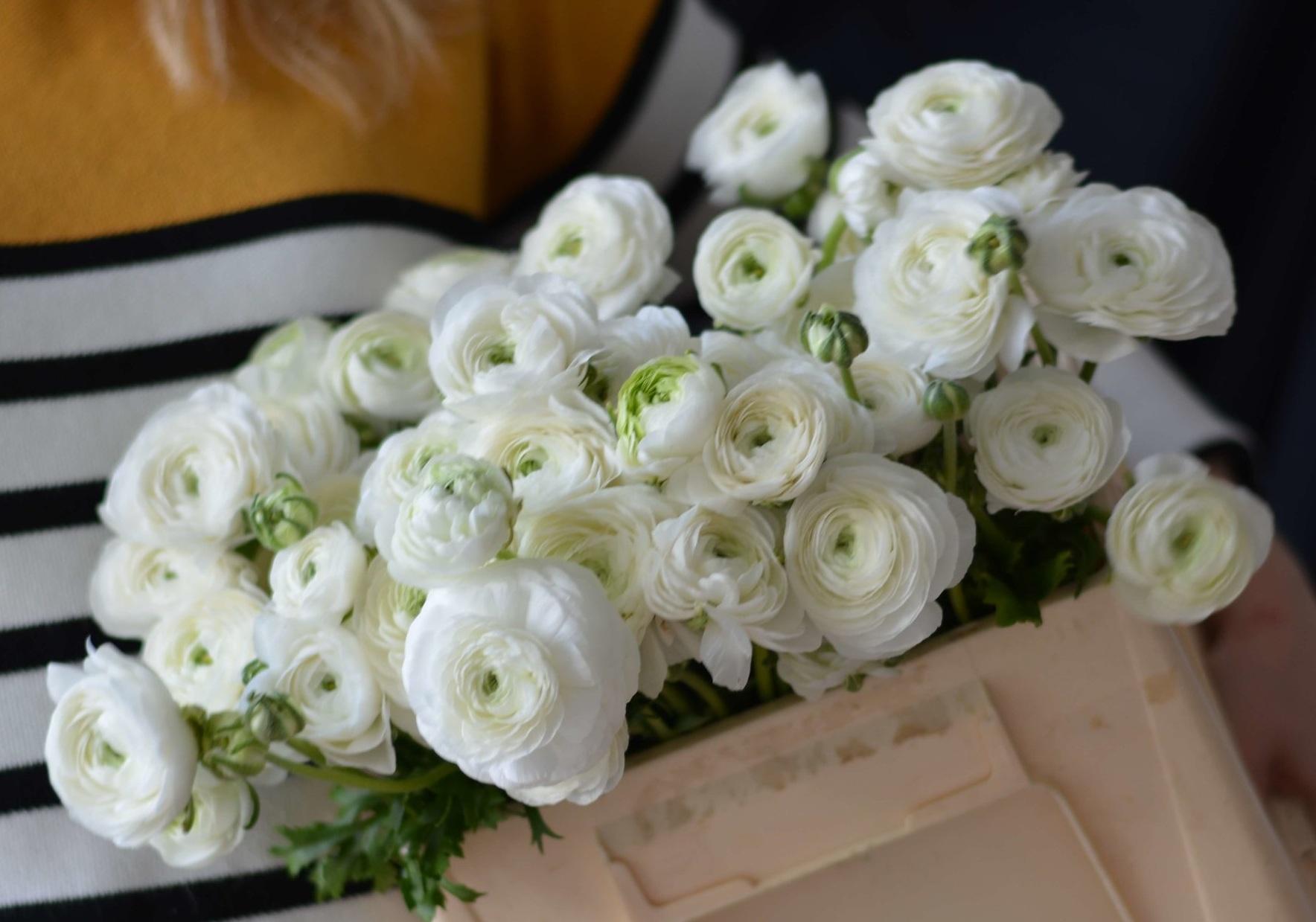 White Ranunculus - Spring wedding Flowers