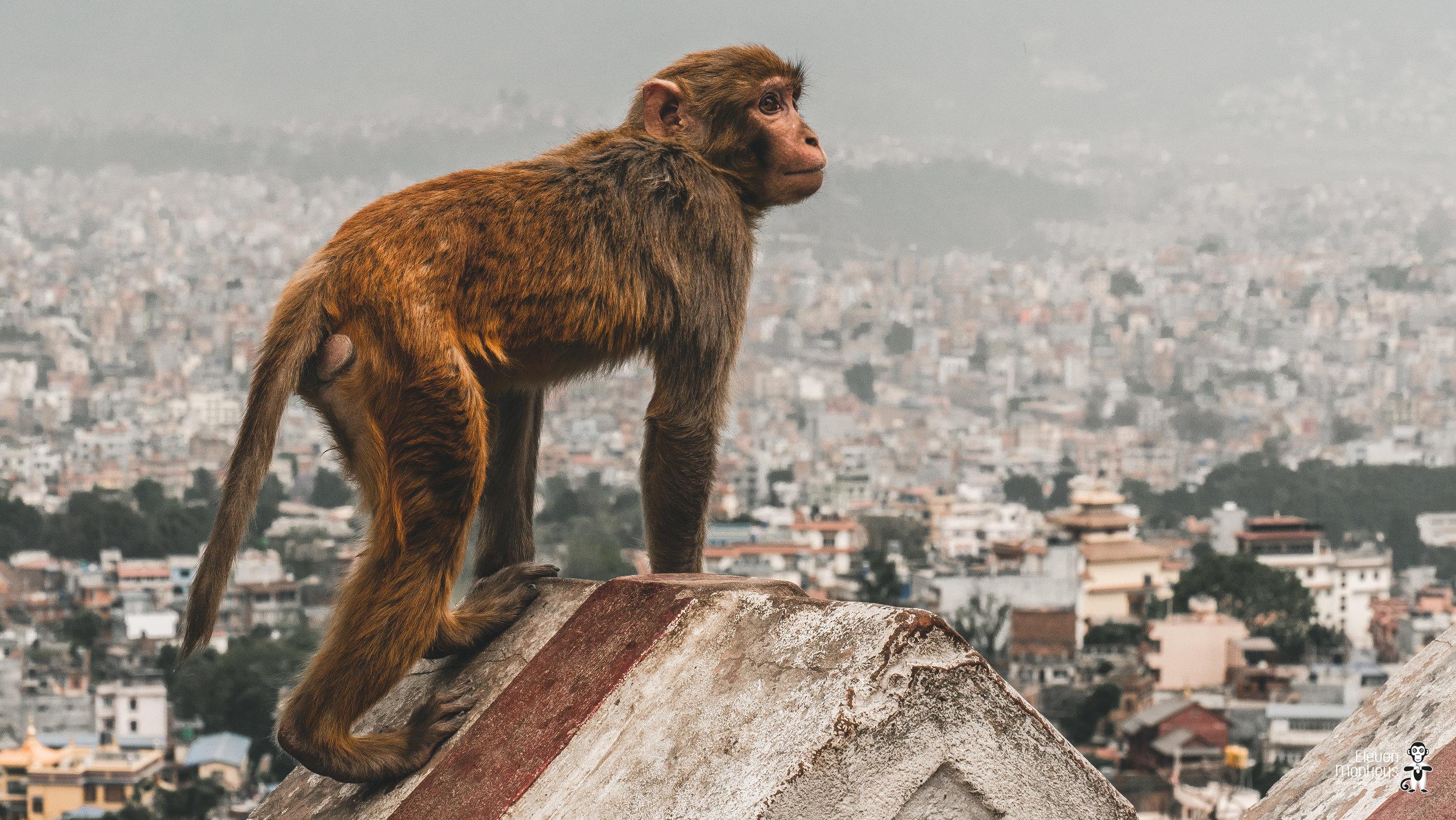 nepal-website-3.jpg