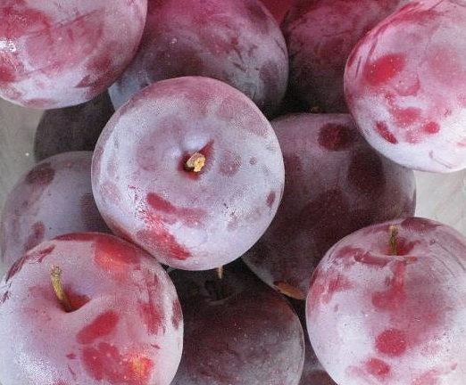 Santa Rosa Plums - These delicious yellow-fleshed red-skinned plums originated from Santa Rosa, California in 1906. These plums are sweet and juicy and a favorite for eating fresh.