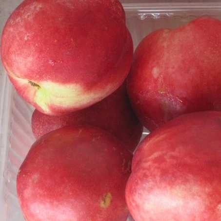 White Nectarines - We grow over four varieties of white fleshed nectarines. White nectarines are know for their extremely sweet and sugary flavor. White nectarines are in season from end of July-August.