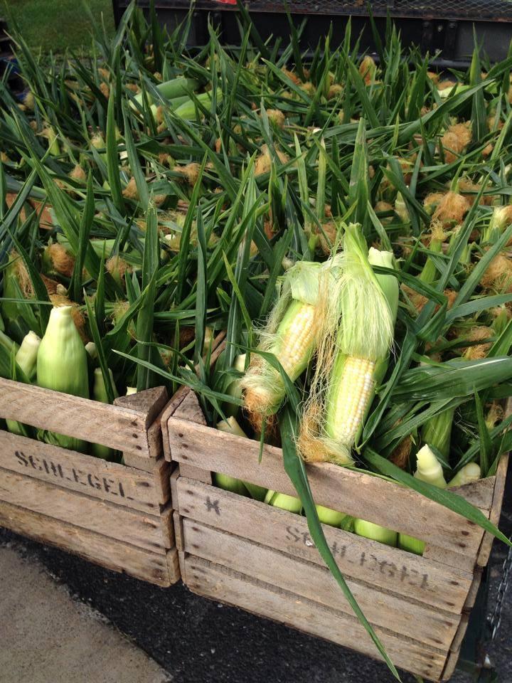 sweet corn.jpg