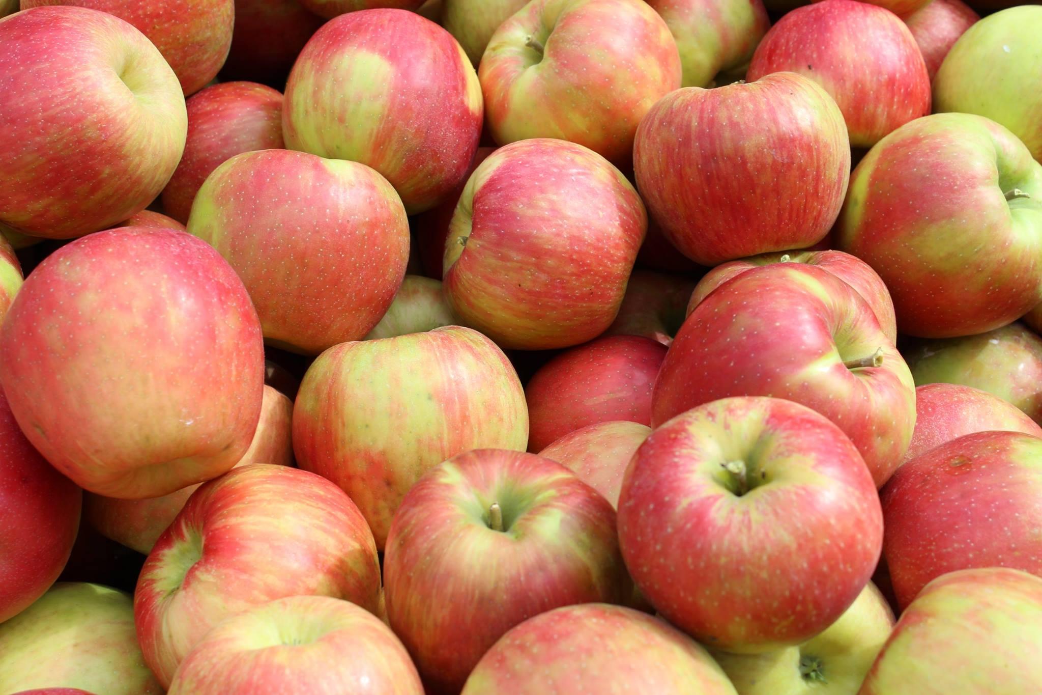 Honey crisp Apples.jpg
