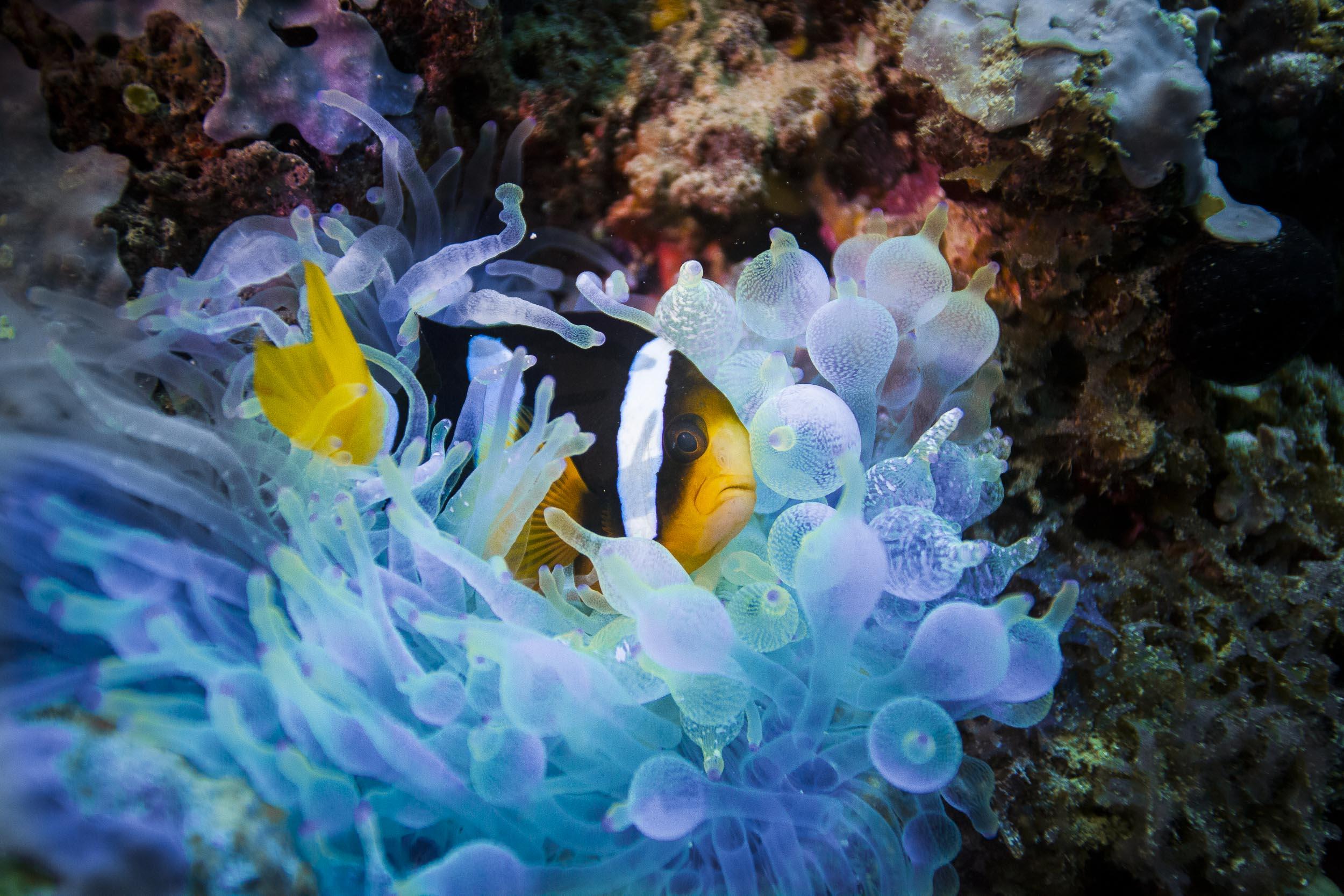 maldives-underwater-reef-fish-marine-7.jpg