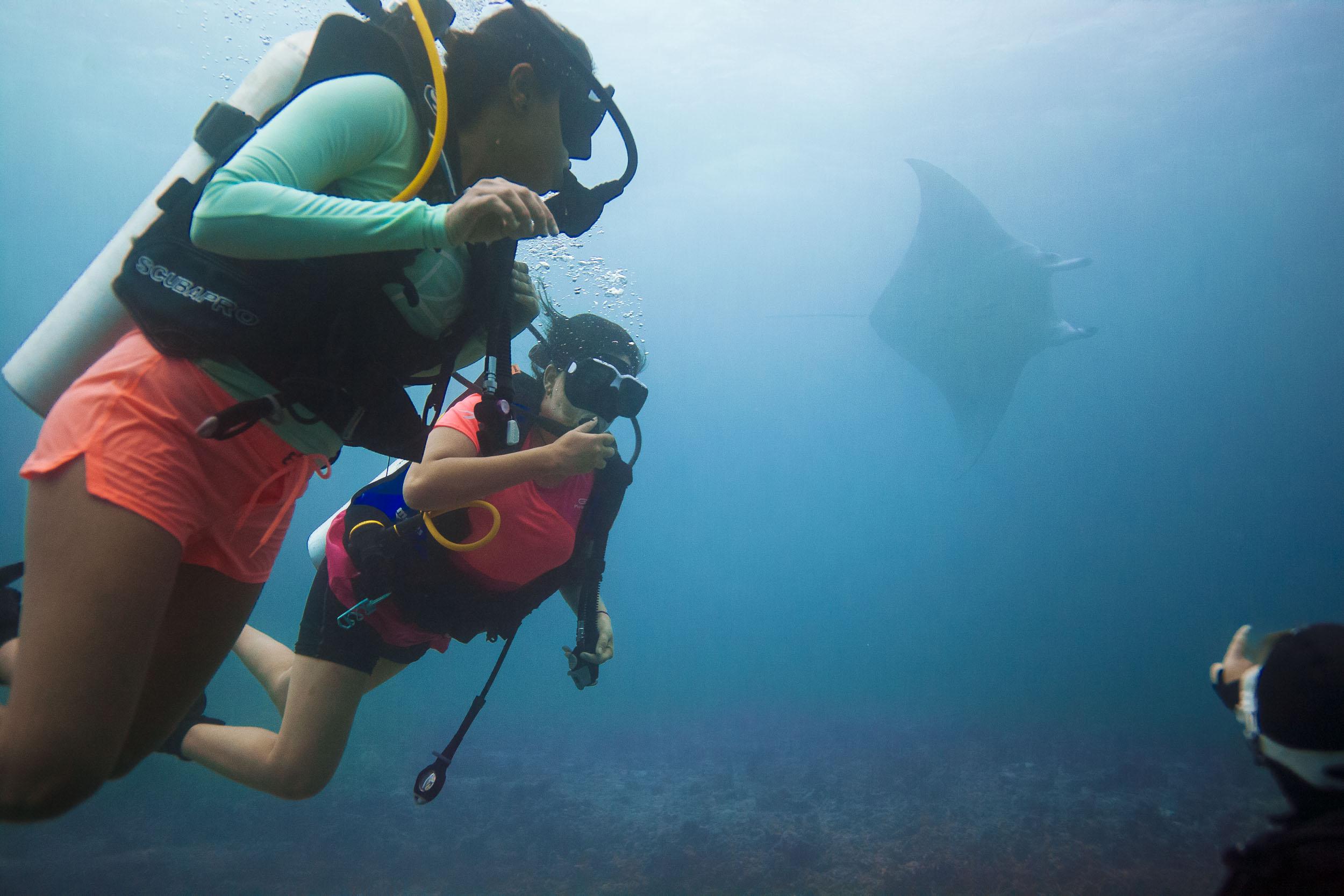 maldives-underwater-reef-fish-marine-5.jpg