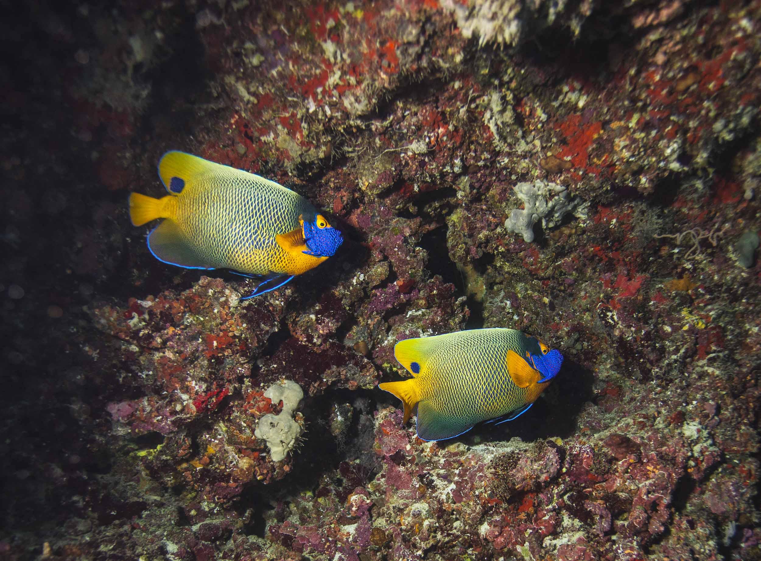 maldives-underwater-reef-fish-marine-2.jpg