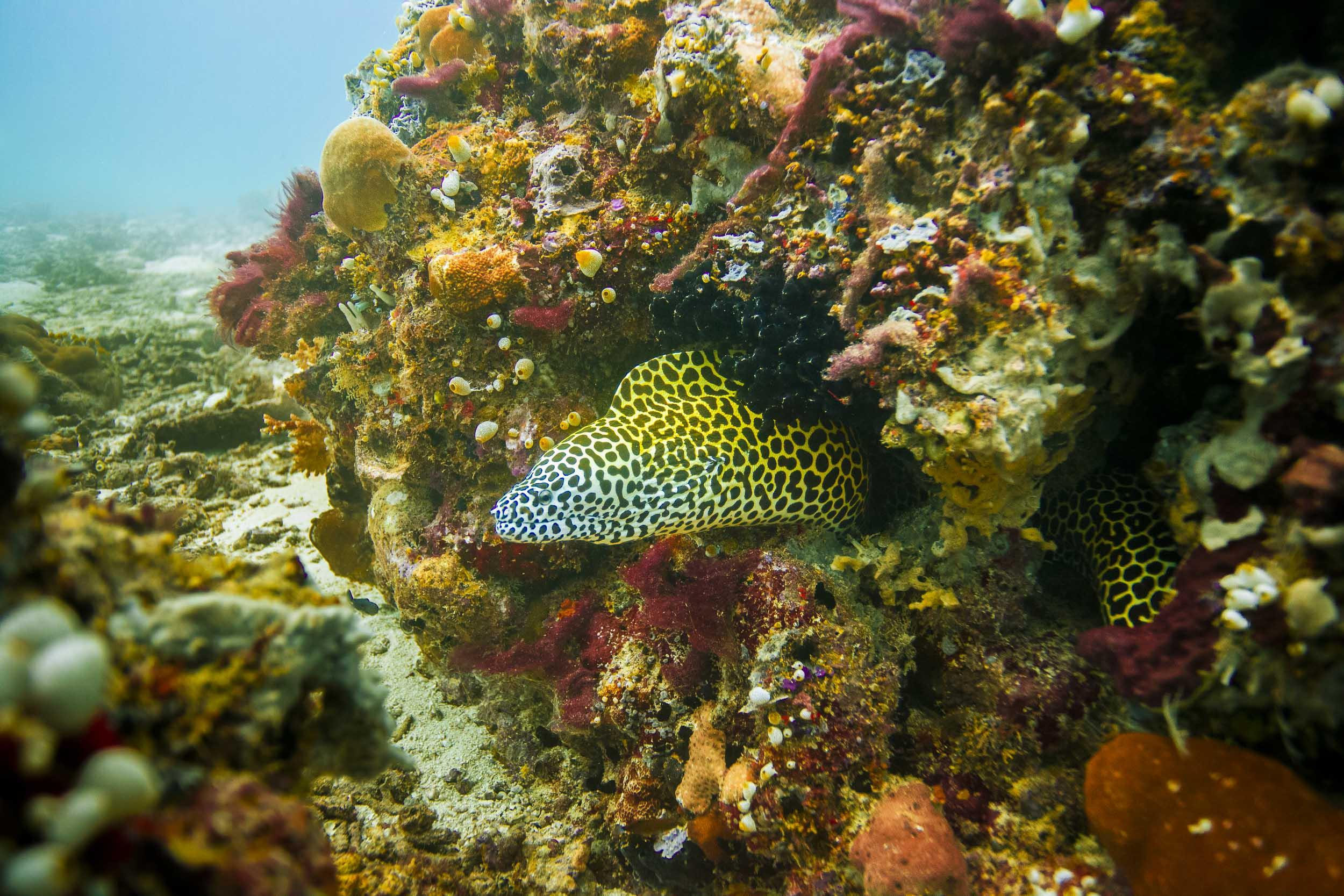 maldives-underwater-reef-fish-marine-6.jpg