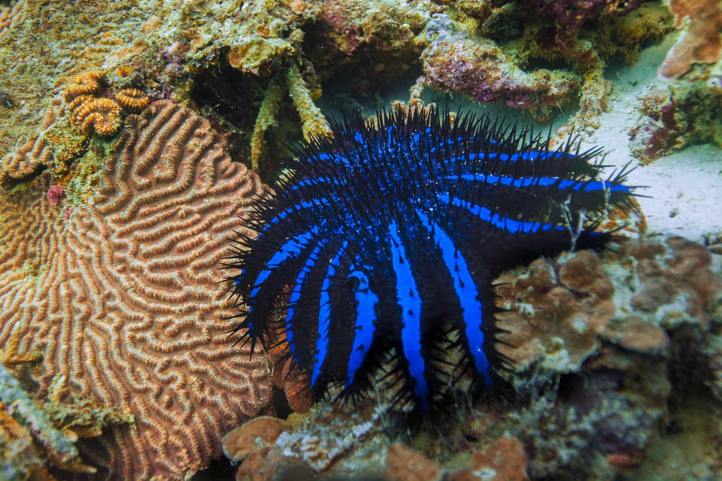 maldives-underwater-reef-fish-marine-pest.jpg