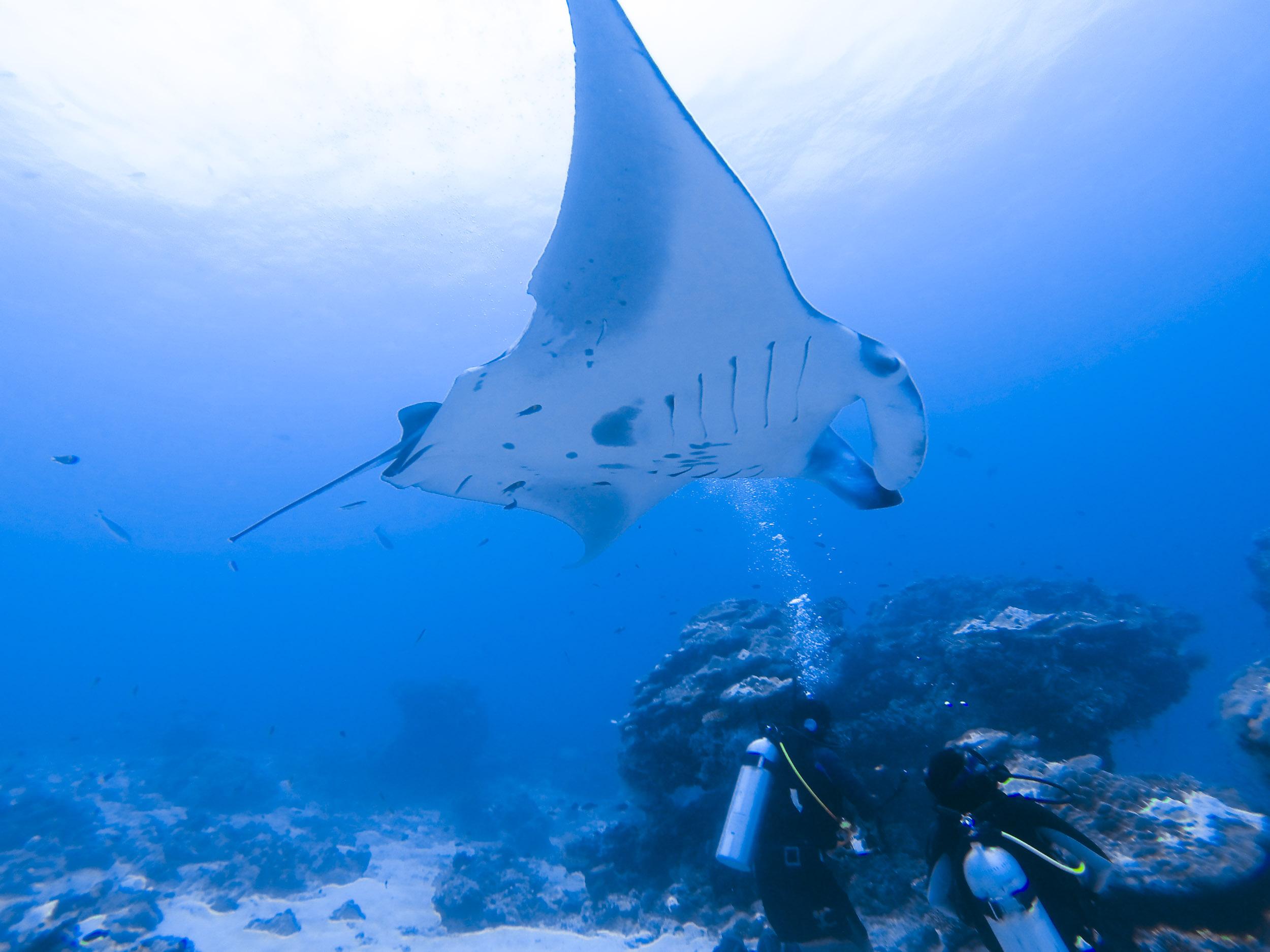 liveaboard-maldives-scuba-diving.jpg