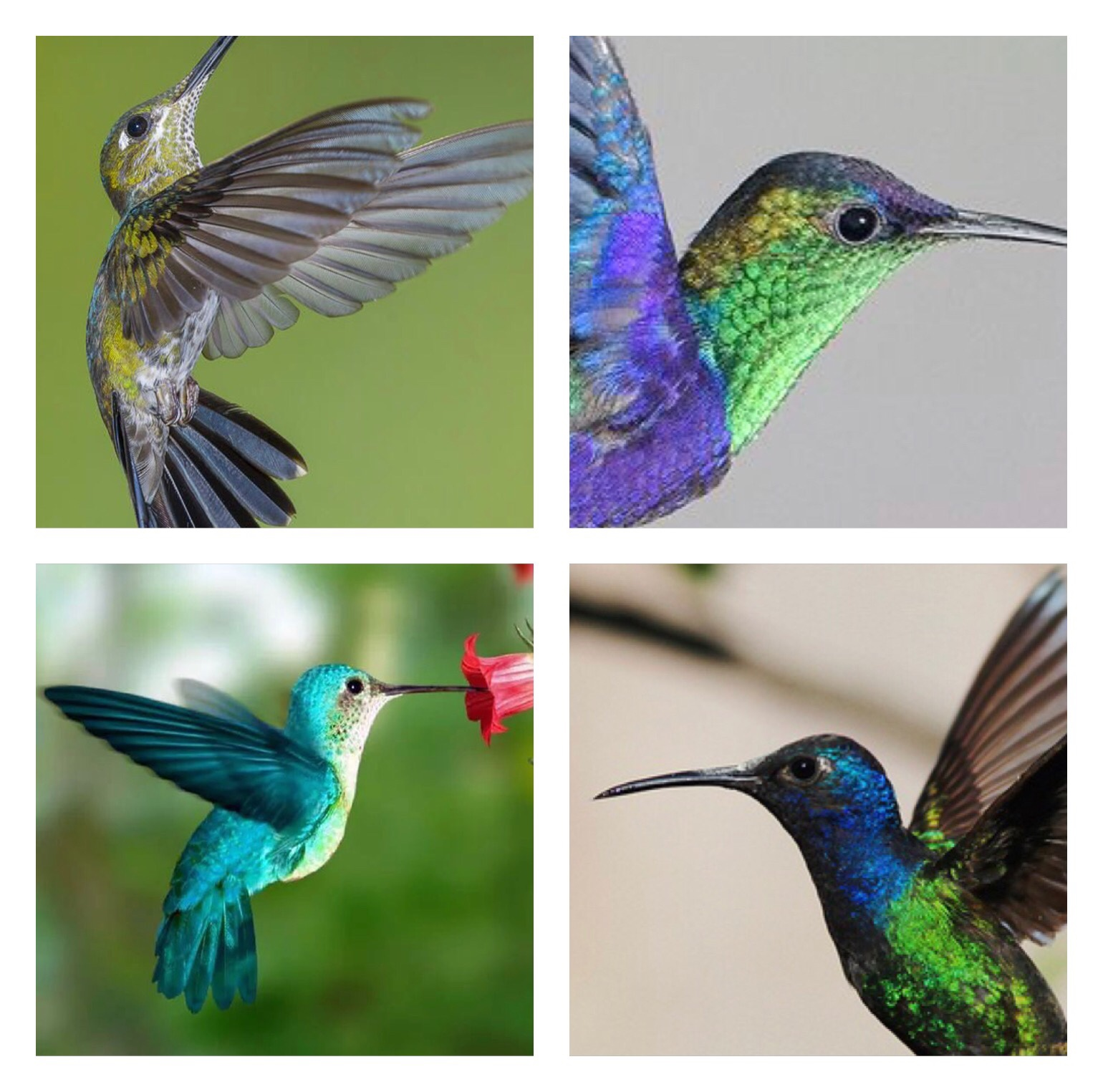 - For a single design I would recommend at least 4 images per design element.For this example of a hummingbird, I took at least 4 images of hummingbirds and 4 images of the flowers I added later as well.The more images, the easier it is the create a true to life drawing with 'copying'. You will find it easier to really get a feel for the subject you are drawing.If you can take your own photos or better still have what your are drawing to hand that's great! As for other sources, I recommend Pinterest for reference photographs of plants and animals. I'm sure that google images would do the job nicely too.
