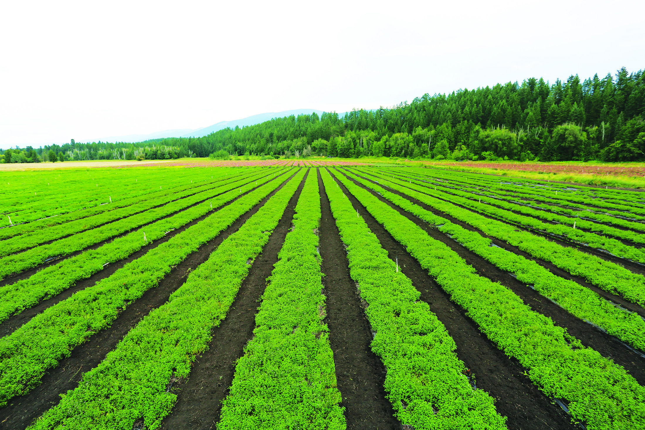 assured farms.jpg