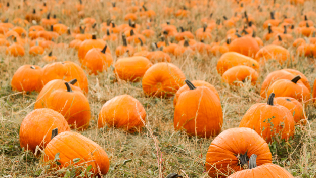 Holy Spirit Lutheran Church - Another great local church spot to pick out your favorite pumpkins! Perfect for big parties so you can make sure you have a private spot for your pumpkin picking festivities! Make sure to make your reservations here !! They'll be open from October 14th through Halloween, so go get a good one, before they're all gone !!