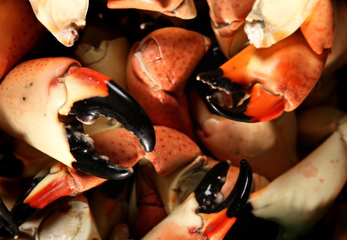 2. Steve's Stone Crab - Another popular location to get the best Stone Crab is Steve's Stone Crab. It's all in the name, and this family business has raving reviews for all of their local seafood!