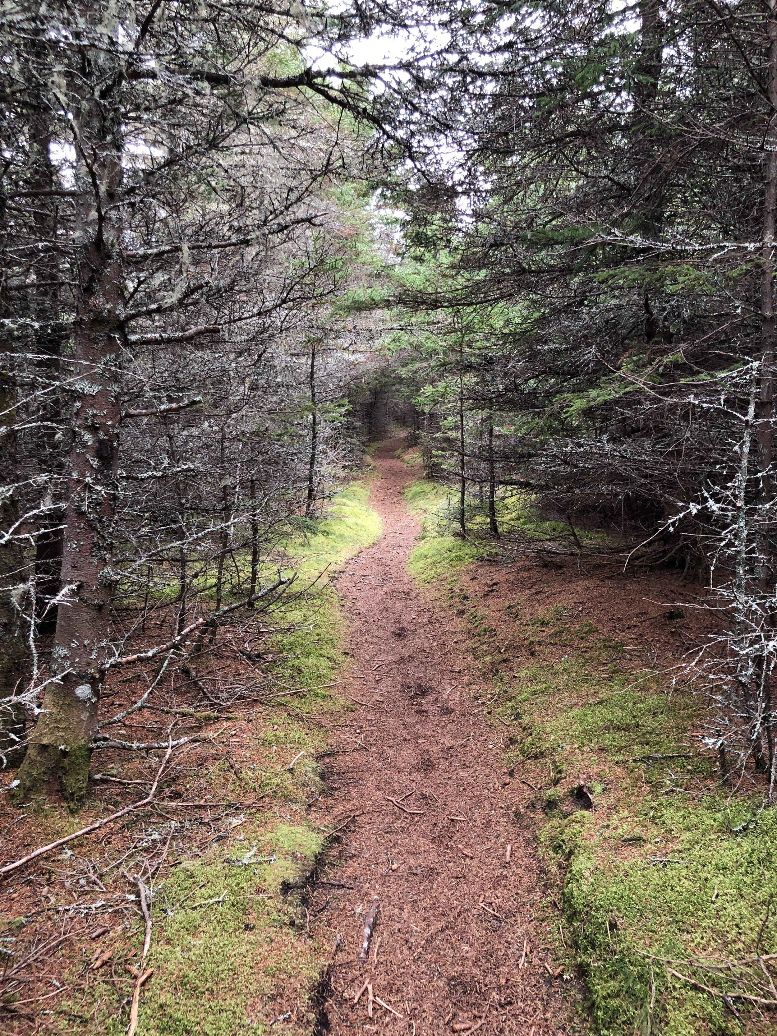 The path behind Conrod's Beach.
