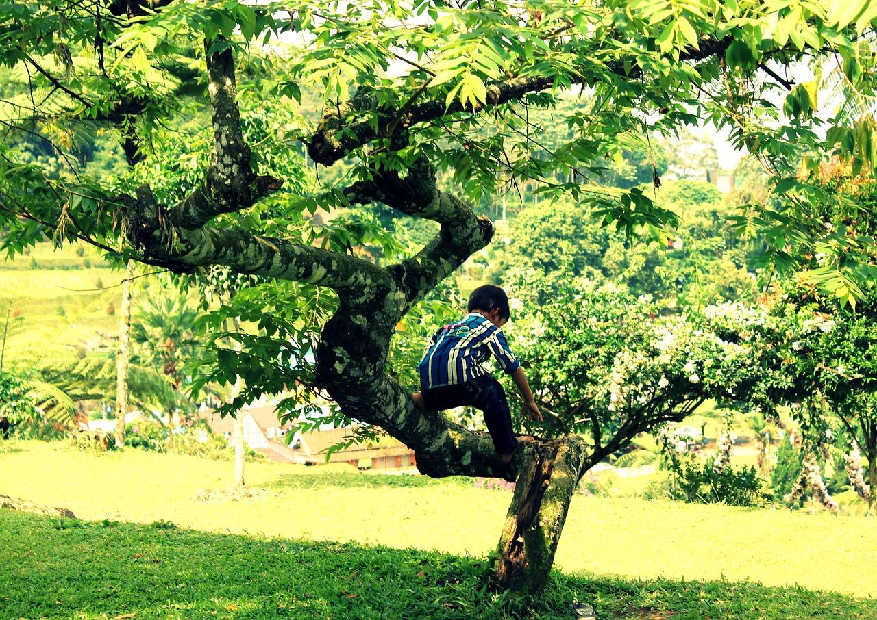 green-1737737_1280.jpg