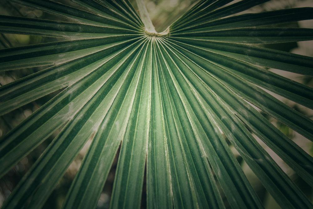 palmleaf.jpg