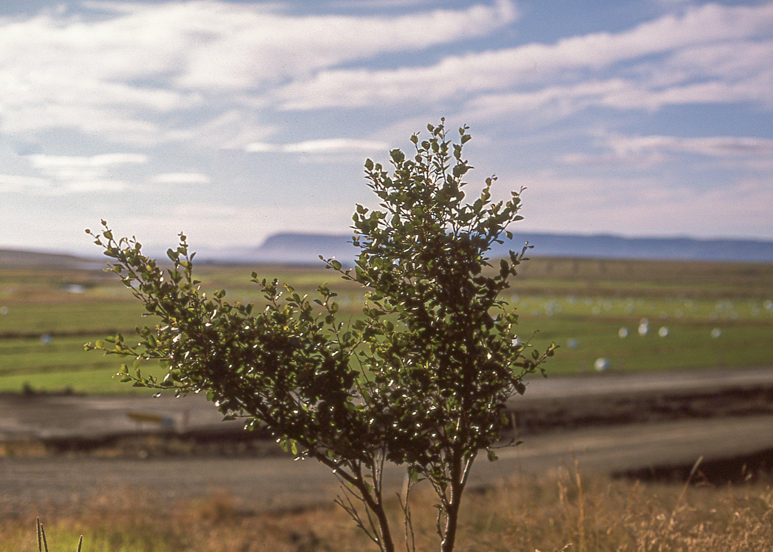 Saurbær, Nikon F3, Provia100F