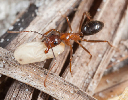 ant-research-03_450x350_acf_cropped.jpg