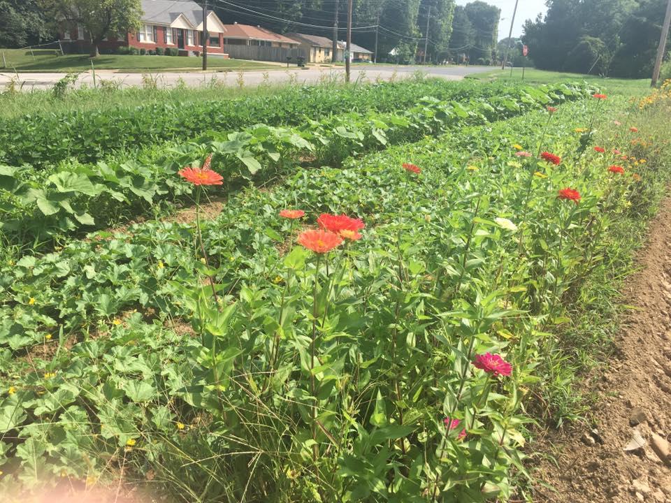 frayser youth farm has a positive impact on youth community - WREG