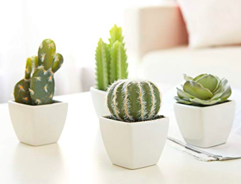 Mini Succulent Set - Again, I have been on a plant thing recently. And succulents are my absolute FAVORITE!! This cutie little set of four is less than $20 on prime! I love the simple white vases too.Shop them here.