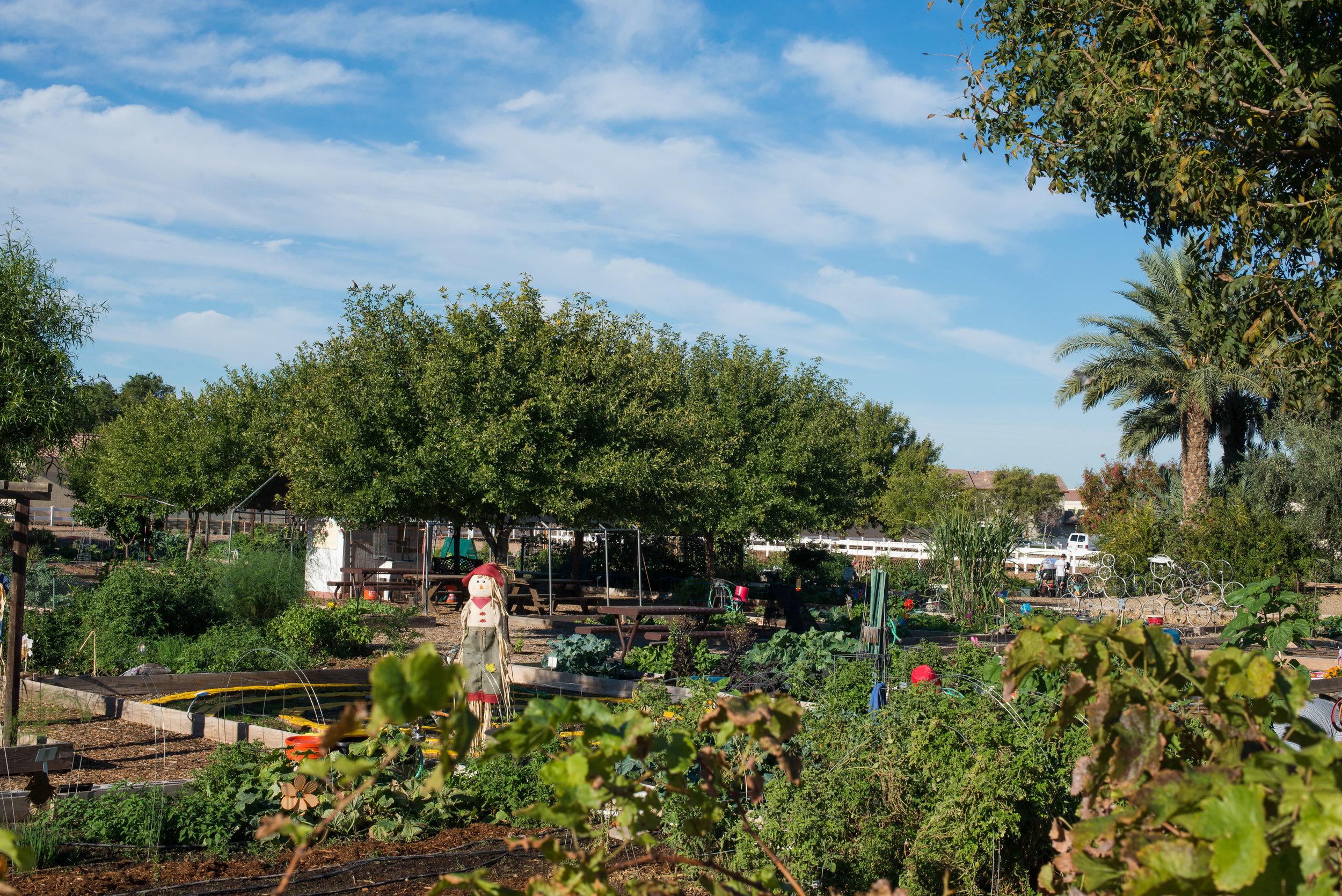 October garden-1-2.jpg