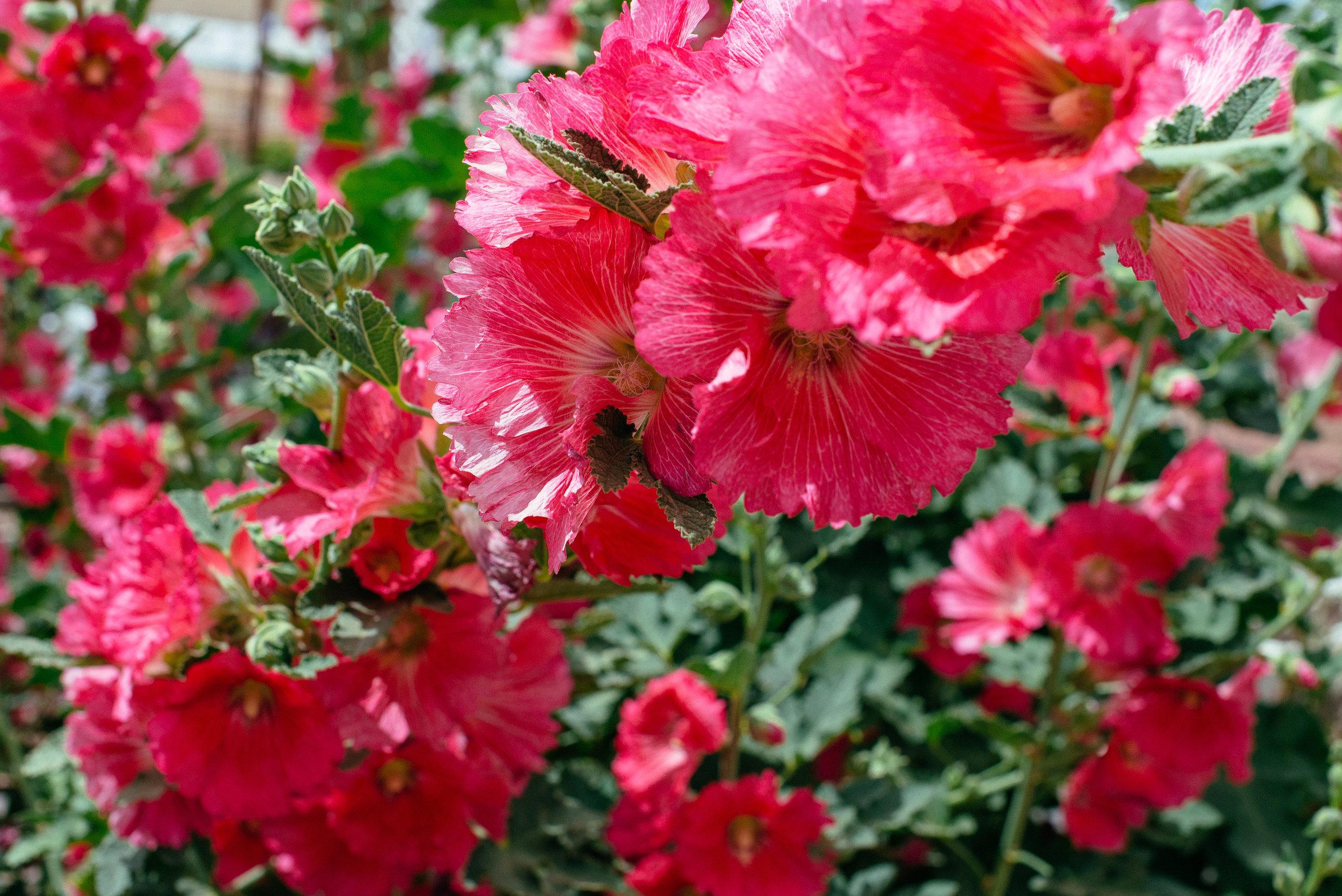 Blooming March-5.jpg