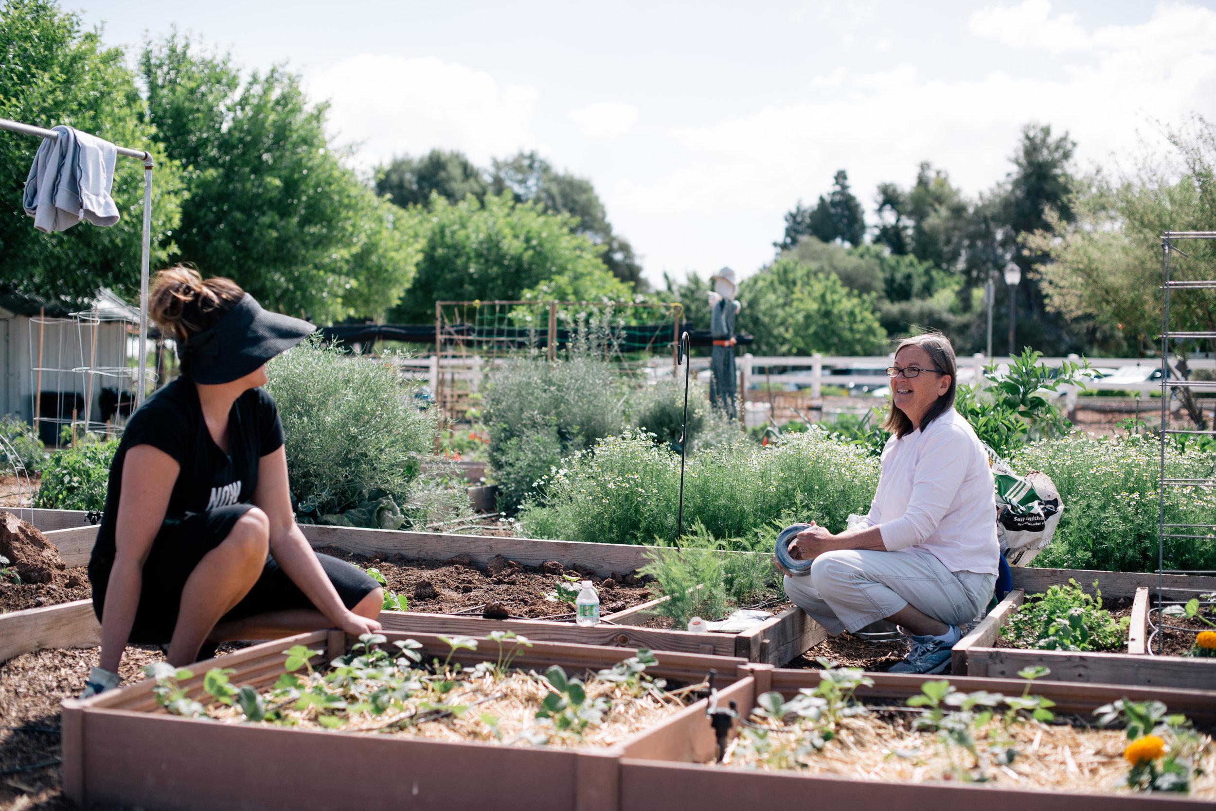 garden tid bits-2.jpg