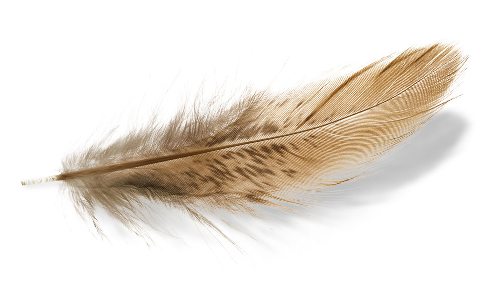 newagency_feather.jpg