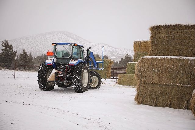 Hay in the front, minerals in the back. Gotta love Winter.