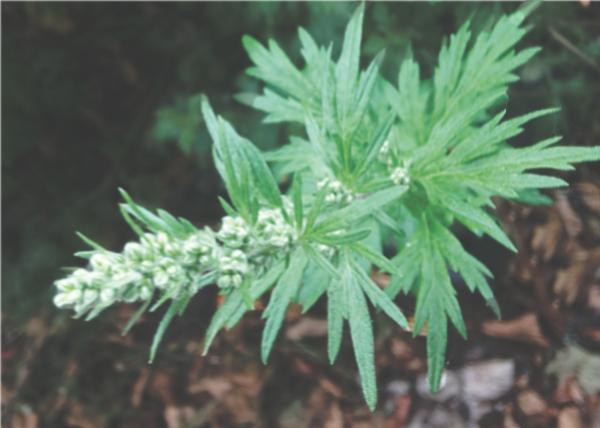 Protective-Herbs-5.jpg