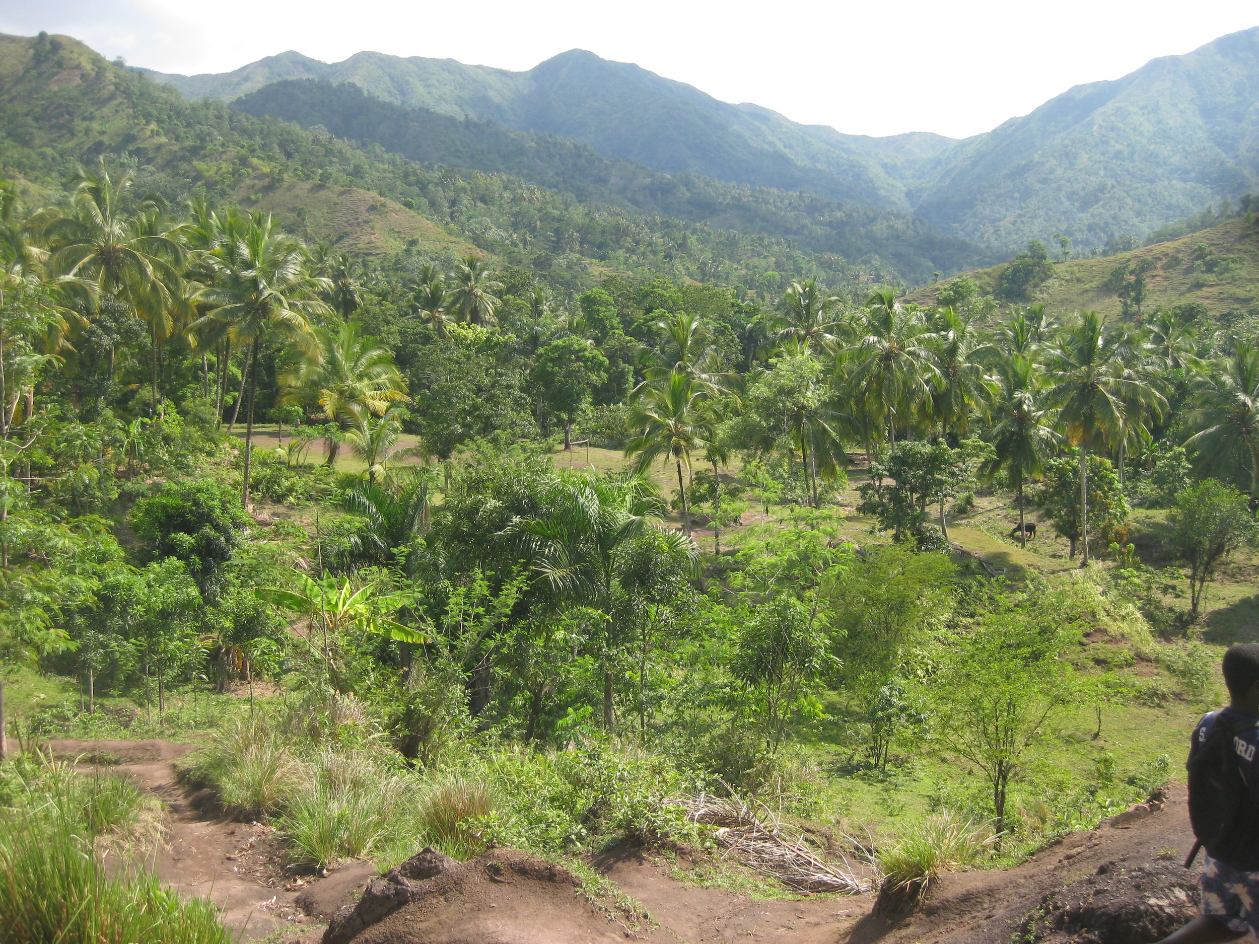 Mountains and local agriculture near Soufriere.