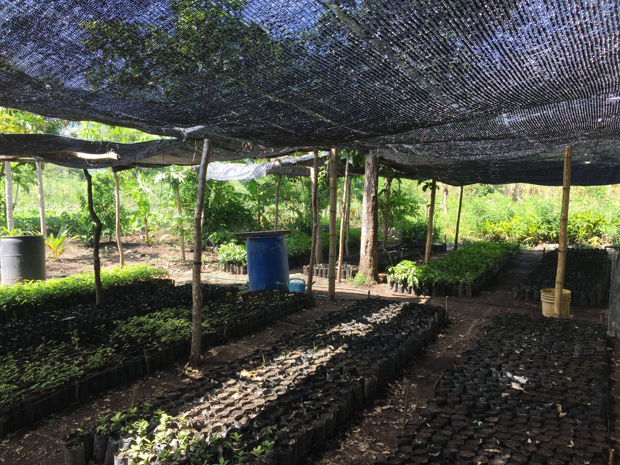 Plant nursery at the PDL facility, which supports local farmer cooperatives.