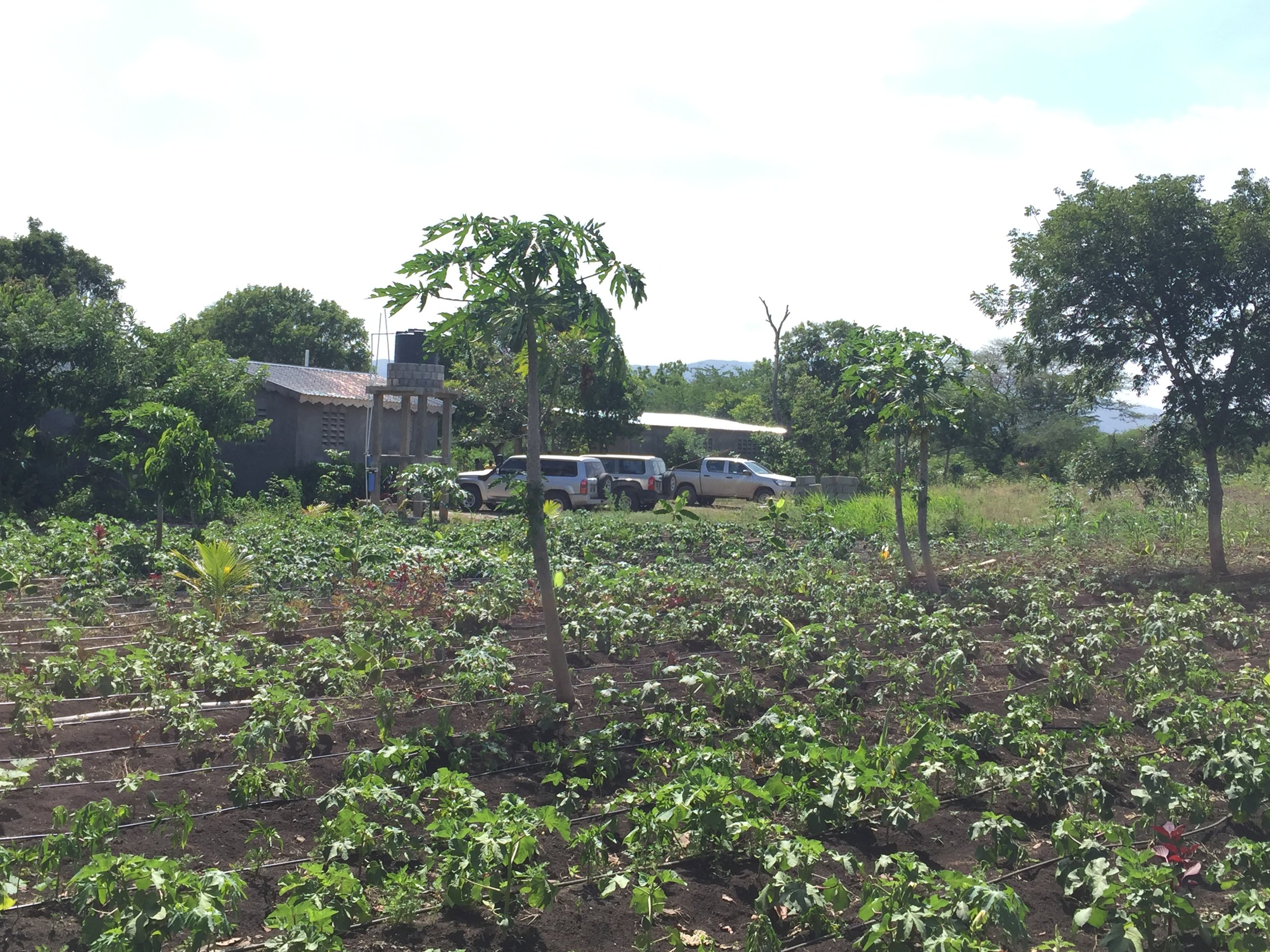 The PDL main office and agricultural test plots near St. Rafael, Haiti.