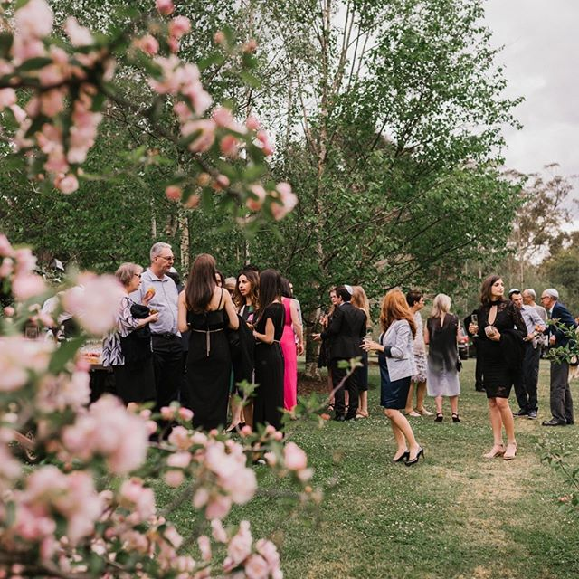 Our crab apple tree garden is the perfect place to hold your ceremony. Ask us about booking when our trees are in full bloom to capture a beautiful setting like this. . Photography @jamesdayweddings  @grandbistro_wombathollow  Location: Spring Meadow Garden - Crabapple Trees Catering @grandbistro . . . #springwedding #blossominglove #countrywedding #southernhighlands #wedding #flowers #weddingseason #spring #fullbloom #candid #weddingphotography #southernhighlandswedding #backdrops #naturalattraction #weddingphotography #together #bride #groom #love #forever #lovedup