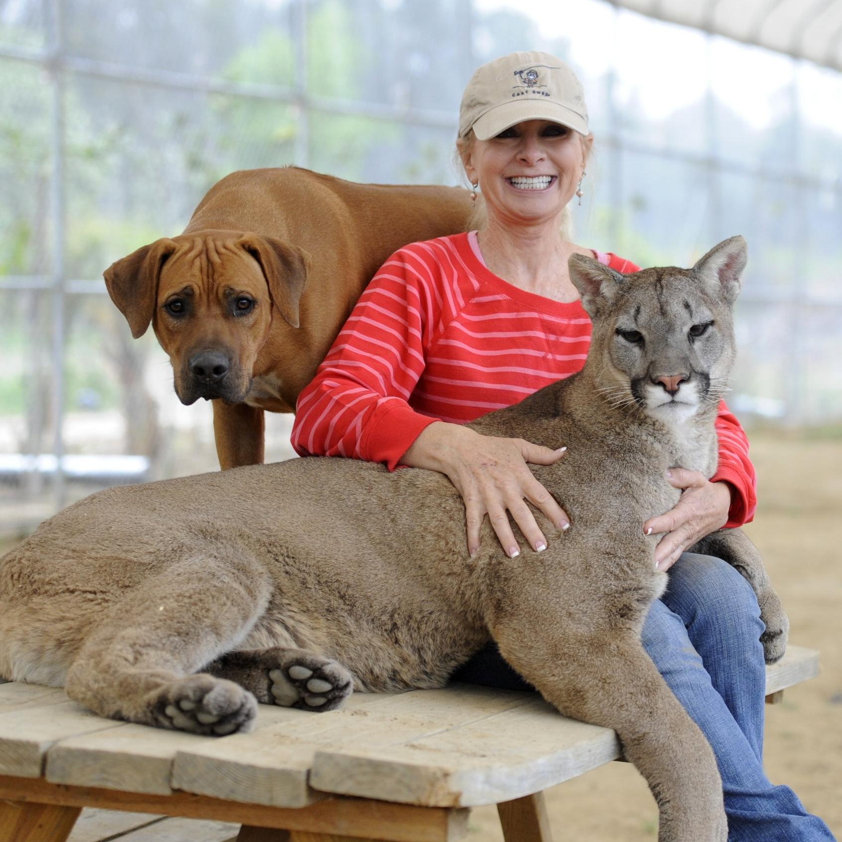 Cougar -