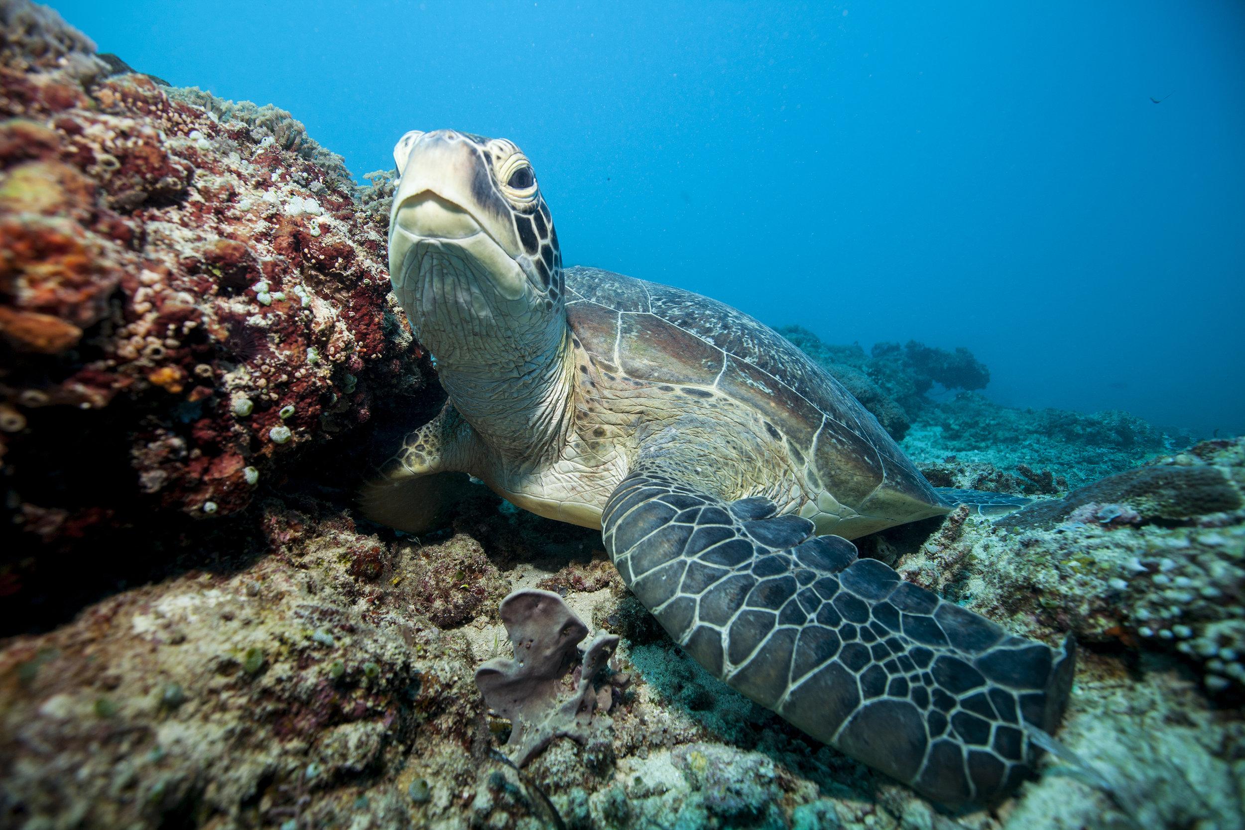 Turtle Andaman and Nicobar Islands