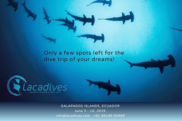 GALAPAGOS, JUNE 2019. Only a couple of spots left (and it's still a year away!) - will you join us and @luminousdeep on the other side of the world? // photography by @luminousdeep . #scuba #diving #scubadiving #plongee #tauchen #buceo #galapagos #liveaboard #ecuador #islands #wildplaces #divetravel #diveholiday #scubaholiday #hammerhead #sharks #lacadives #outbound