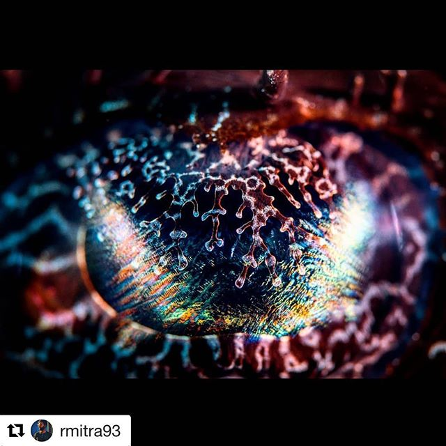 Our dive instructor @rmitra93 creating magic and fire with the macro lens in #Komodonationalpark - our trip there is more than a year away but we're already getting excited! Who's going to share in the dream with us and @tara.oceanista ? #repost ・・・ An eye, for an eye?  Komodo 2018.  #scuba #diving #scubadiving #komodo #indonesia #islands #wildplaces #plongee #buceo #tauchen #ocean #oceanlove #oceanmagic #macro #macrophotography #crocodilefish #eye #animaleyes #marinelife #natgeoyourshot #earthcapture #pristineseas