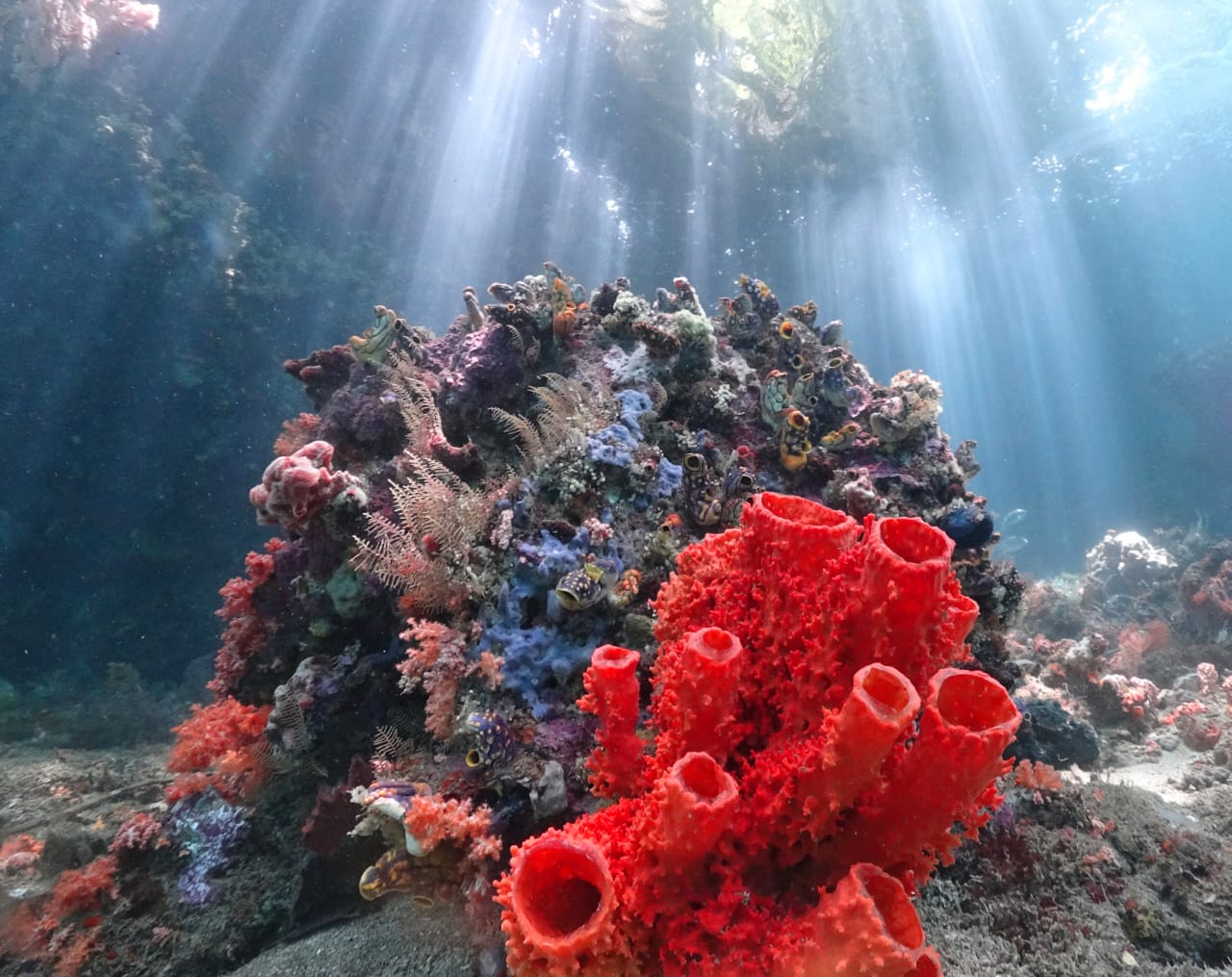 Vibrant coral life at Raja Ampat with Lacadives dive travel