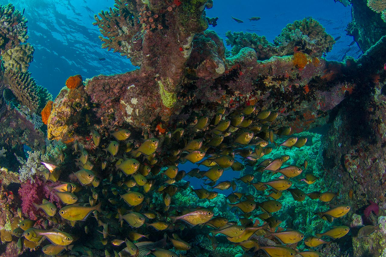 coral_and_school_of_fish_lr.jpg