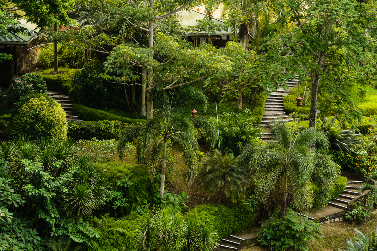 Jungle gardens 1.jpg
