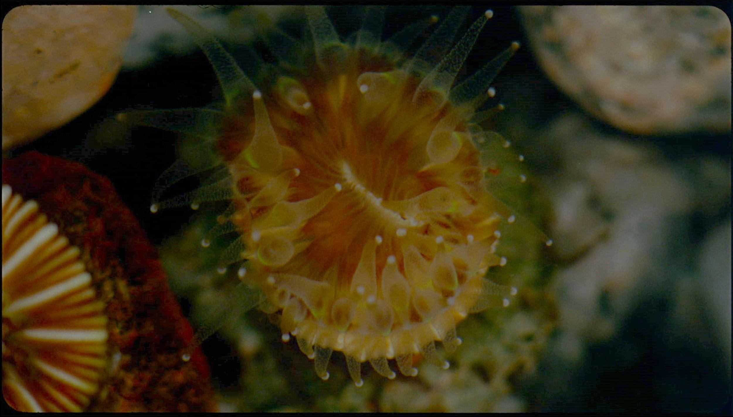 Cup Coral, 'Cladach' film still CREDIT Margaret Salmon 2018 .jpg