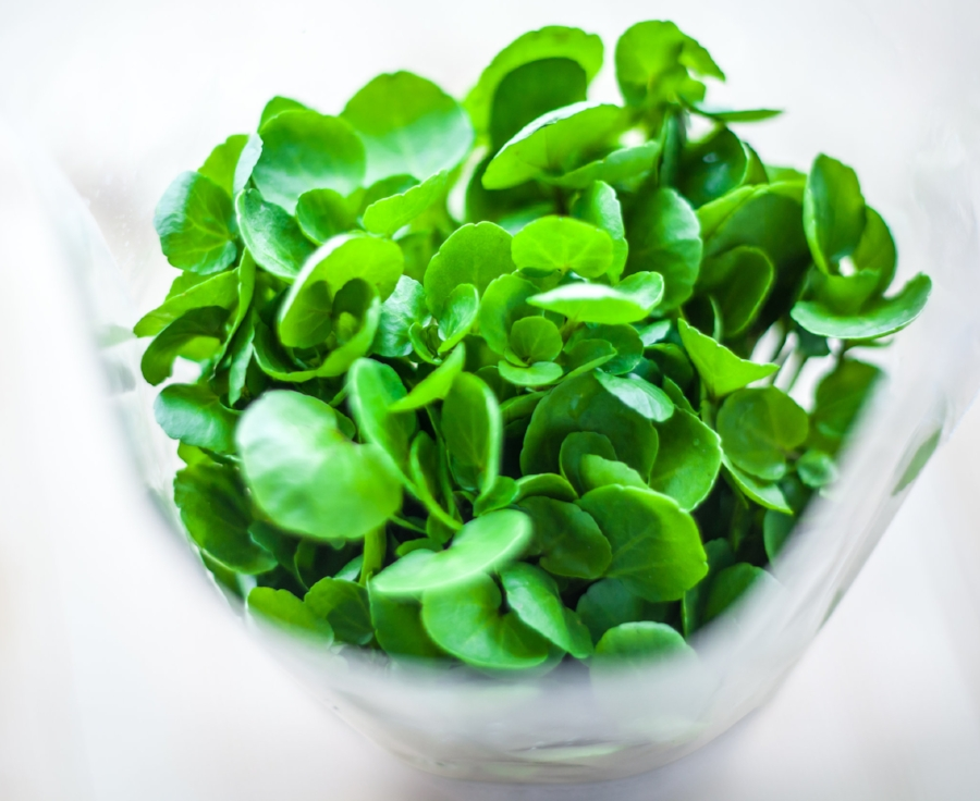 Watercress Bunch on White Background.jpg