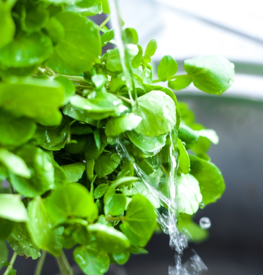 Watercress rinsed in spring water.jpg