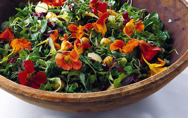 re_flowerrecipes_babygreennasturtium608.jpg