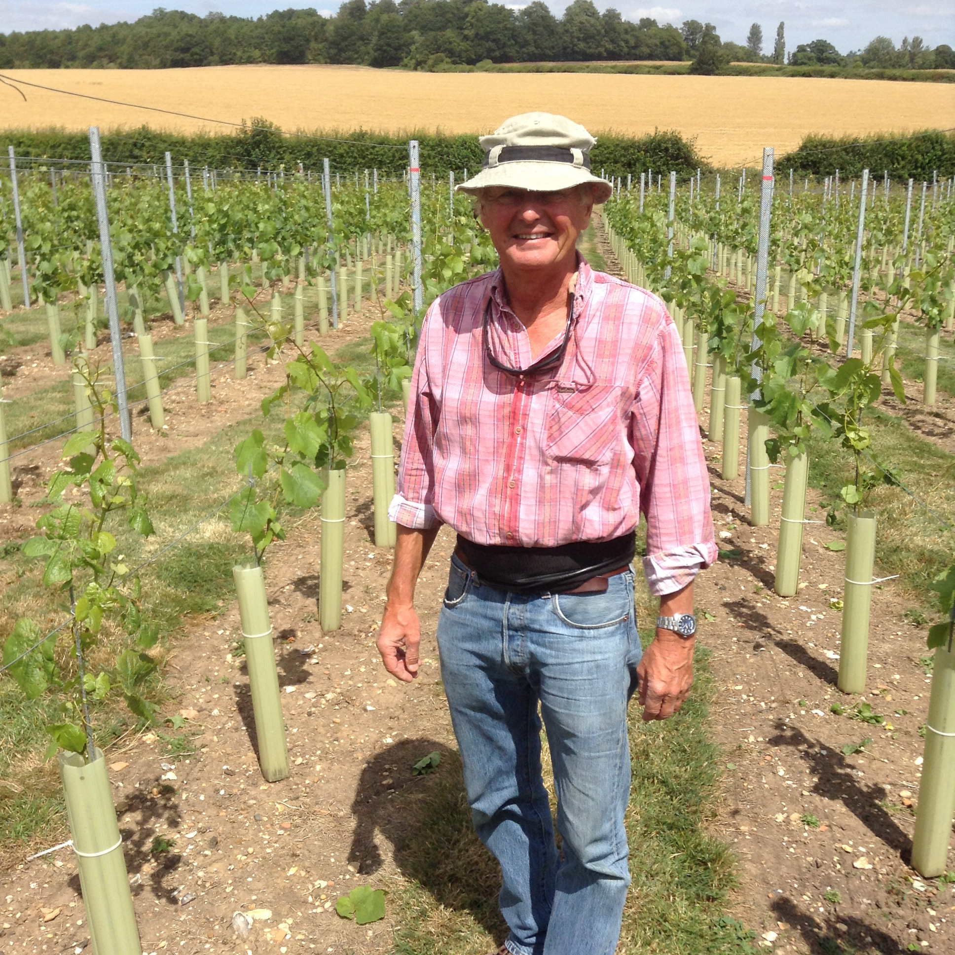 7  Robert in the vineyard 2.JPG