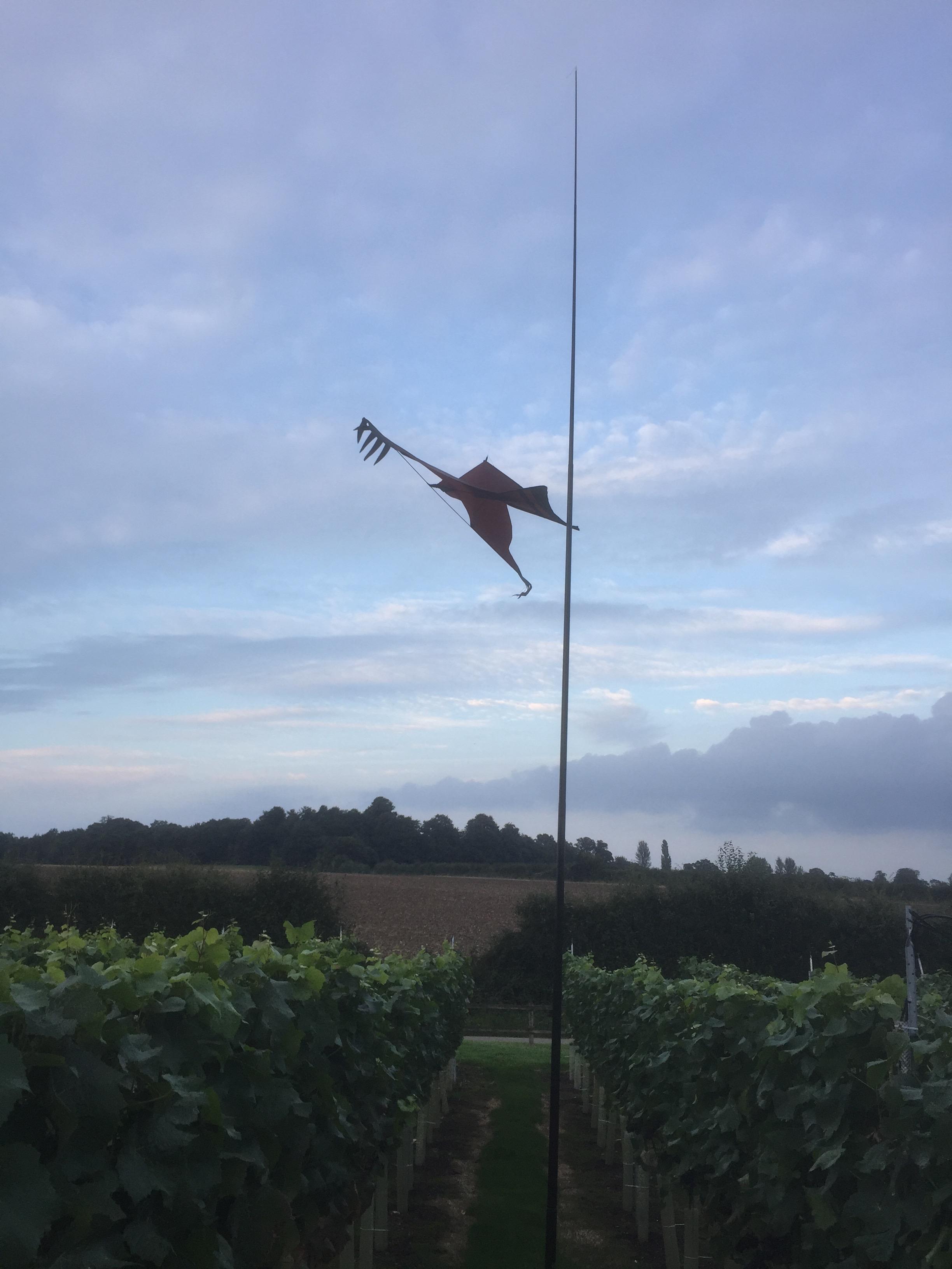 Our bird scaring hawk