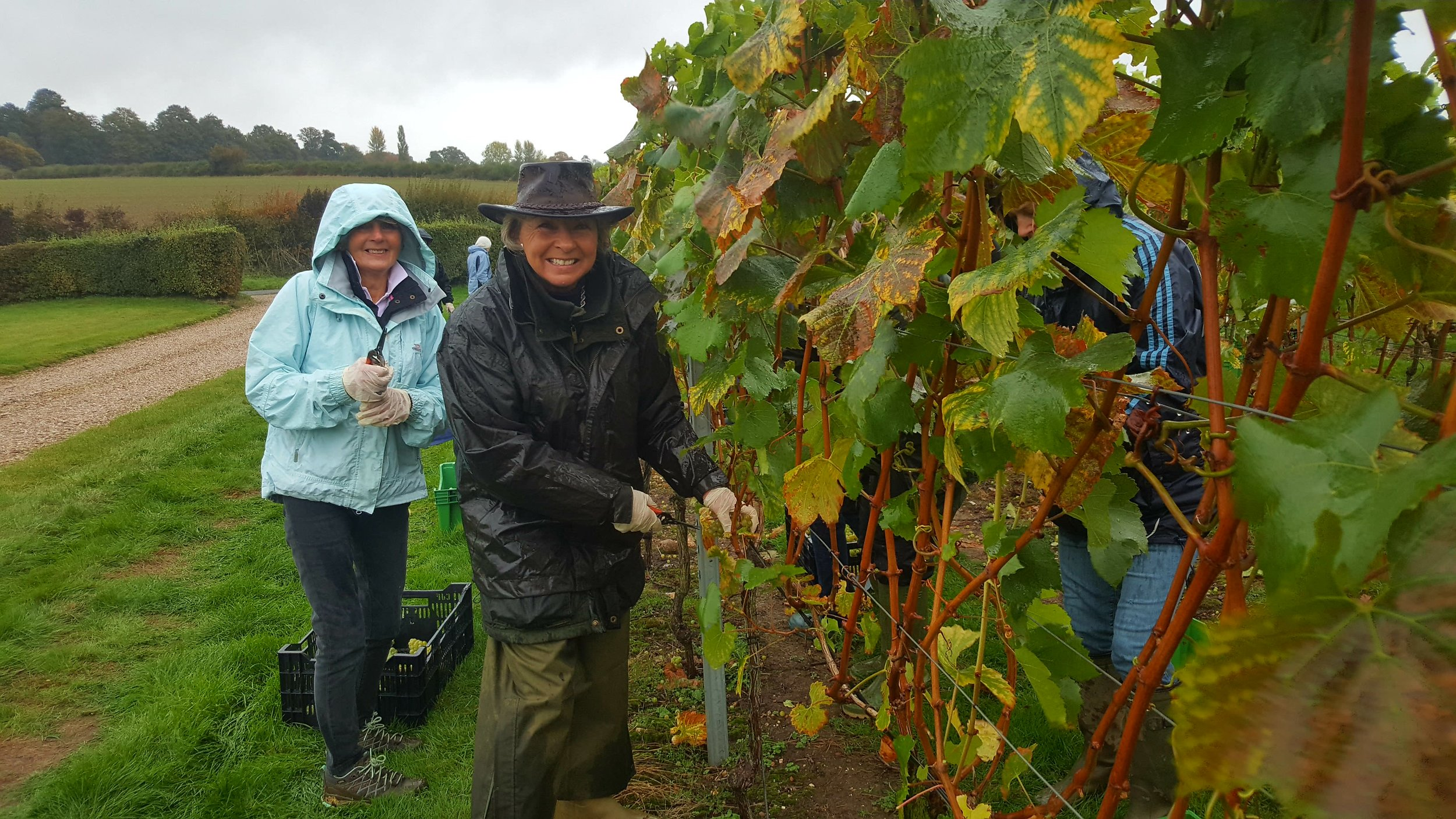 Our hardy pickers defy the wind and the rain to gather in our Chardonnay grapes.