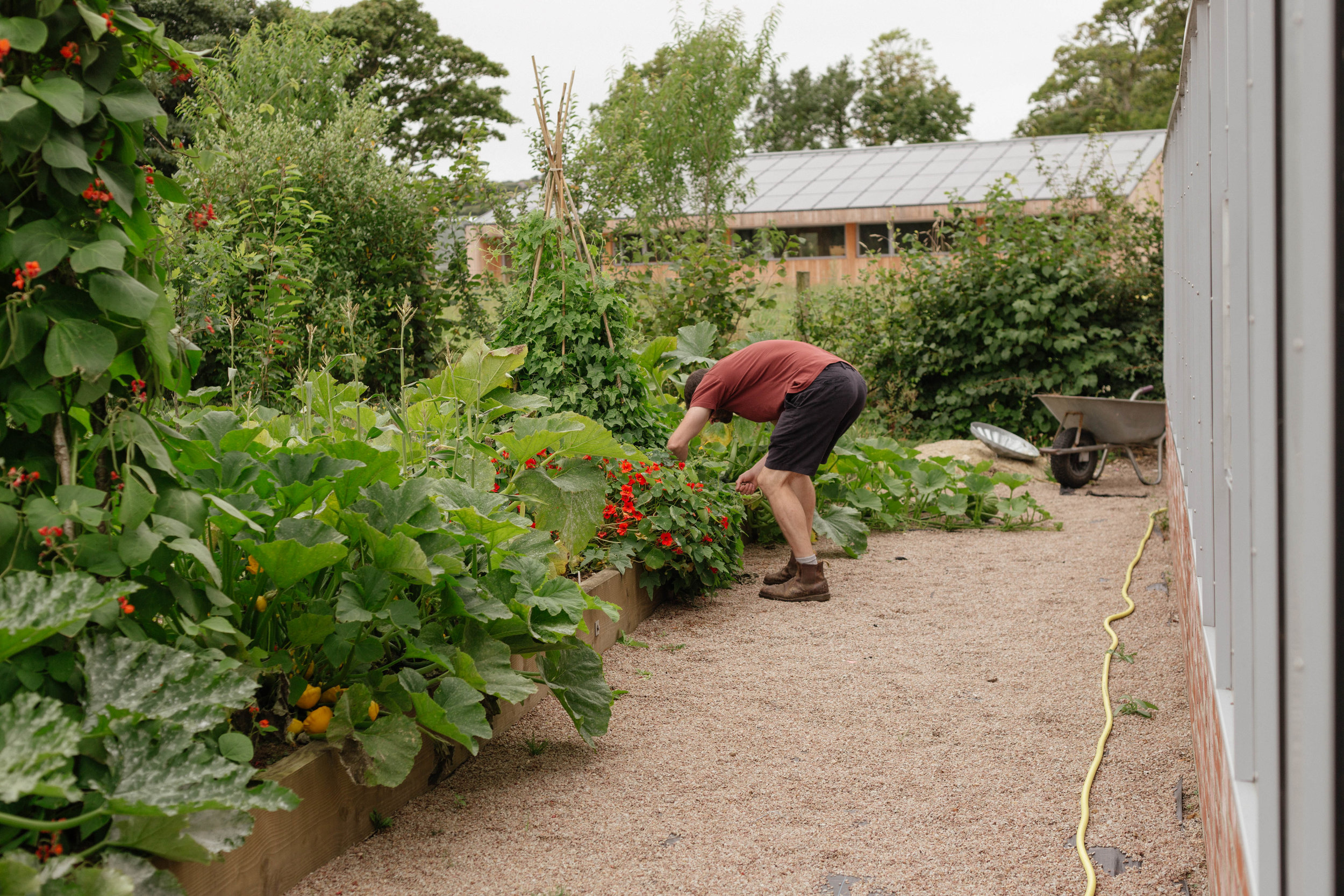 In his forest garden, James rummages through a vegetable bed of summer squash and beans.