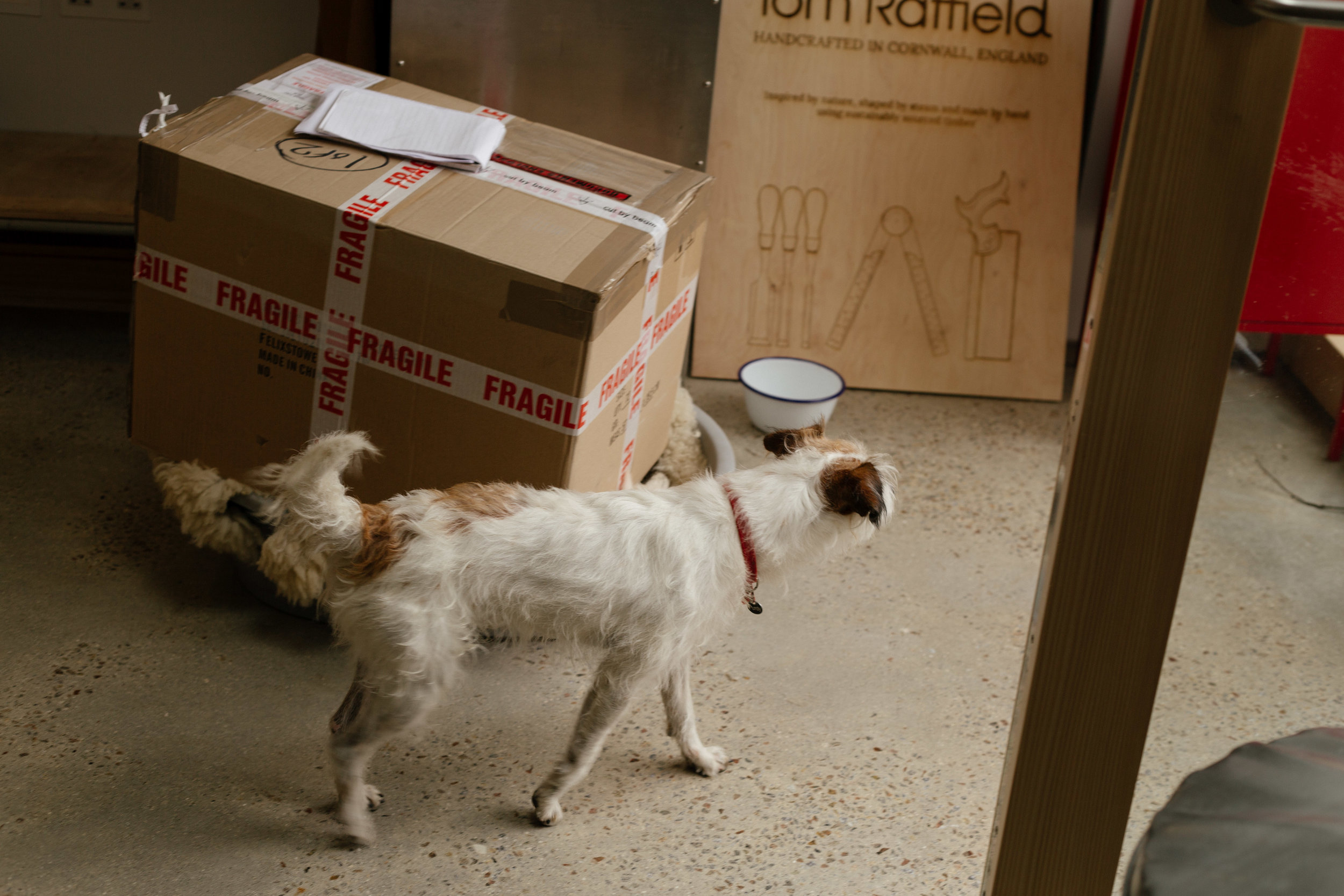 Jenny's terrier, Purdy, stands amongst Cut by Beam's boxes and signage.